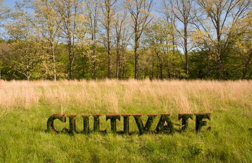 13_cultivate-in-grass-500