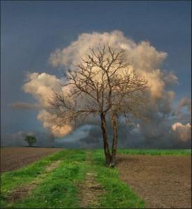 Arbre-nuage-253415-530-577