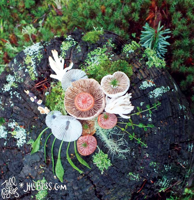 Spring-Stump jill bliss